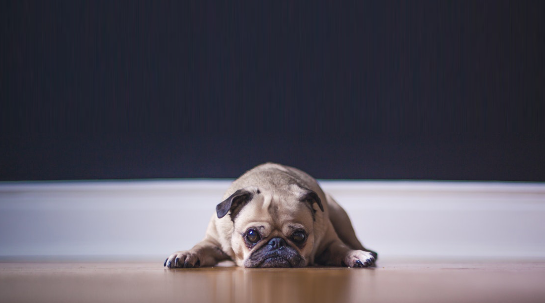 How To Mitigate and Treat Pet Damage on Hardwood Floors